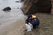 Lo spiaggiamento di crostacei nella Baia di San Montano dell'Isola di Ischia